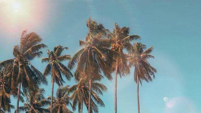 ヤシの木と夏の空